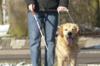 Betreten von Lebensmittelgeschäften mit Blindenführhund oder Assistenzhund erlaubt