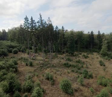 Sperrung von Waldflächen möglich
