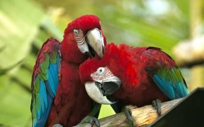 Für die Zucht von Papageien gelten Artenschutzvorschriften. Foto: Landkreis Mansfeld-Südharz