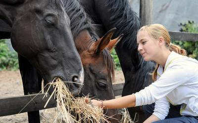 Halter von Pferden und Eseln haben einige gesetzliche Vorgaben zu beachten. Foto: Landkreis Mansfeld-Südharz/ Shutterstock