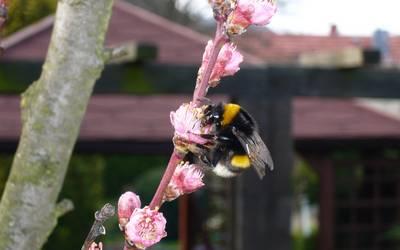 Allgemeinverfügung zur Faulbrut bei Bienen aufgehoben