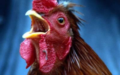 Tierseuchenrechtliche Allgemeinverfügung -Widerruf Aufstallungsgebot