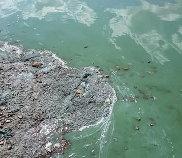 Gesundheitsamt warnt Badegäste am Stausee Kelbra