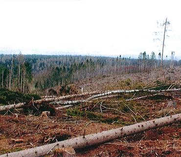 Große Pflanzaktion für den Wald im Landkreis Mansfeld-Südharz