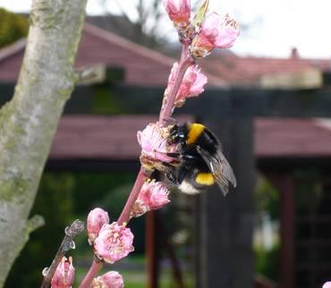 Faulbrut bei Bienen ausgebrochen - Landkreis erlässt Allgemeinverfügung