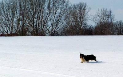 Nicht jeder streunende Hund - wie dieses Tier bei Augsdorf - muss gefährlich sein, aber es kann eine Gefahr von ihm ausgehen. Foto: Landkreis Mansfeld-Südharz/Bernd Bahling